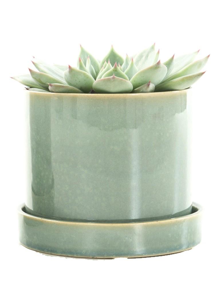 Green lifestyle store Echeveria plant met deep forest pot
