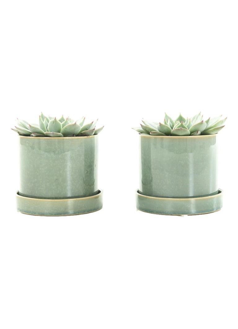 Green lifestyle store Echeveria plant met deep forest pot se